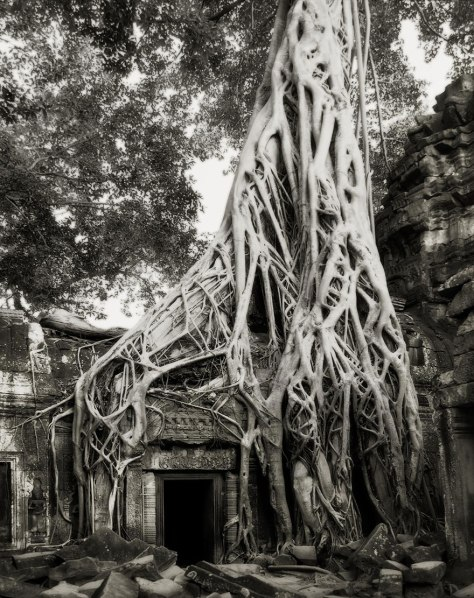 ancient-trees-04