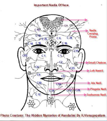 ida-nadi-flows-through-left-nostril-pingala-nadi-flows-through-right-nostril