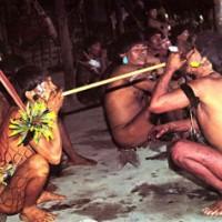 Yopo: o rapé de DMT da Amazônia Ancestral