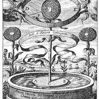 """Simbologia: Flores, Plantas, Frutas e Árvores - """"OS ENSINAMENTOS SECRETOS DE TODAS AS ERAS"""" (1928)"""