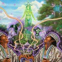 7 Ervas Legais que alteram a consciência e os sonhos