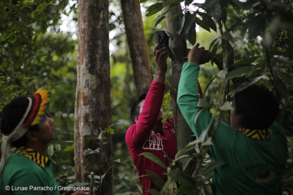 6_Brazil's-forest-villagers-Illegal-Loggers