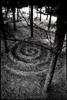 pineforestspiral_sm