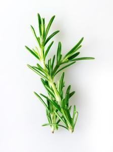 Folhas de Alecrim