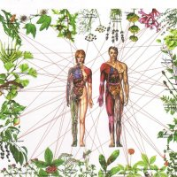 Curando os 7 Chakras com Ervas e Plantas