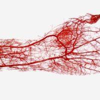 Fatos e Teorias sobre o Sangue
