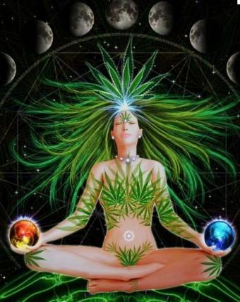 conexão entre a meditação e a cannabis
